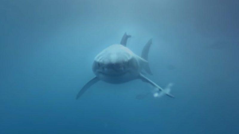 Samsung – Shark Dive